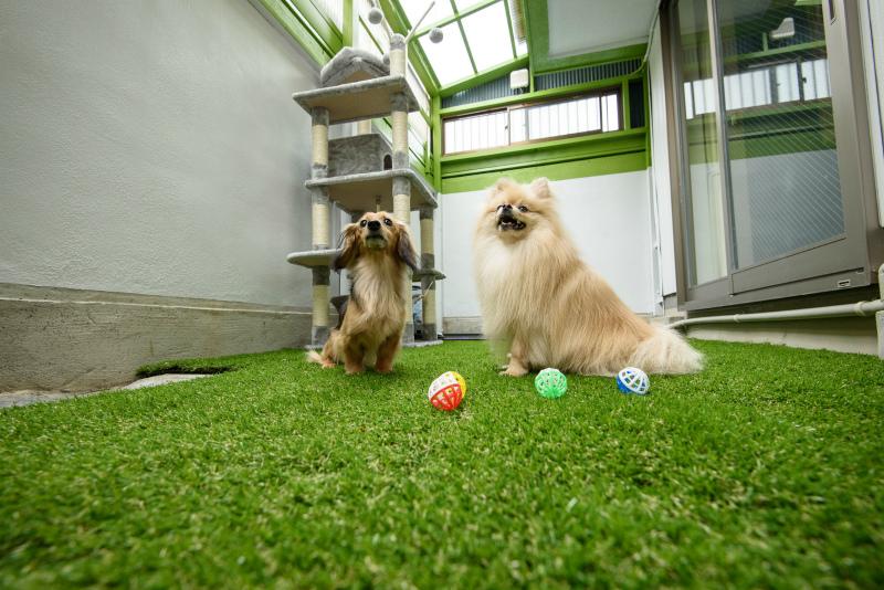 Pet Share 180° 上飯田